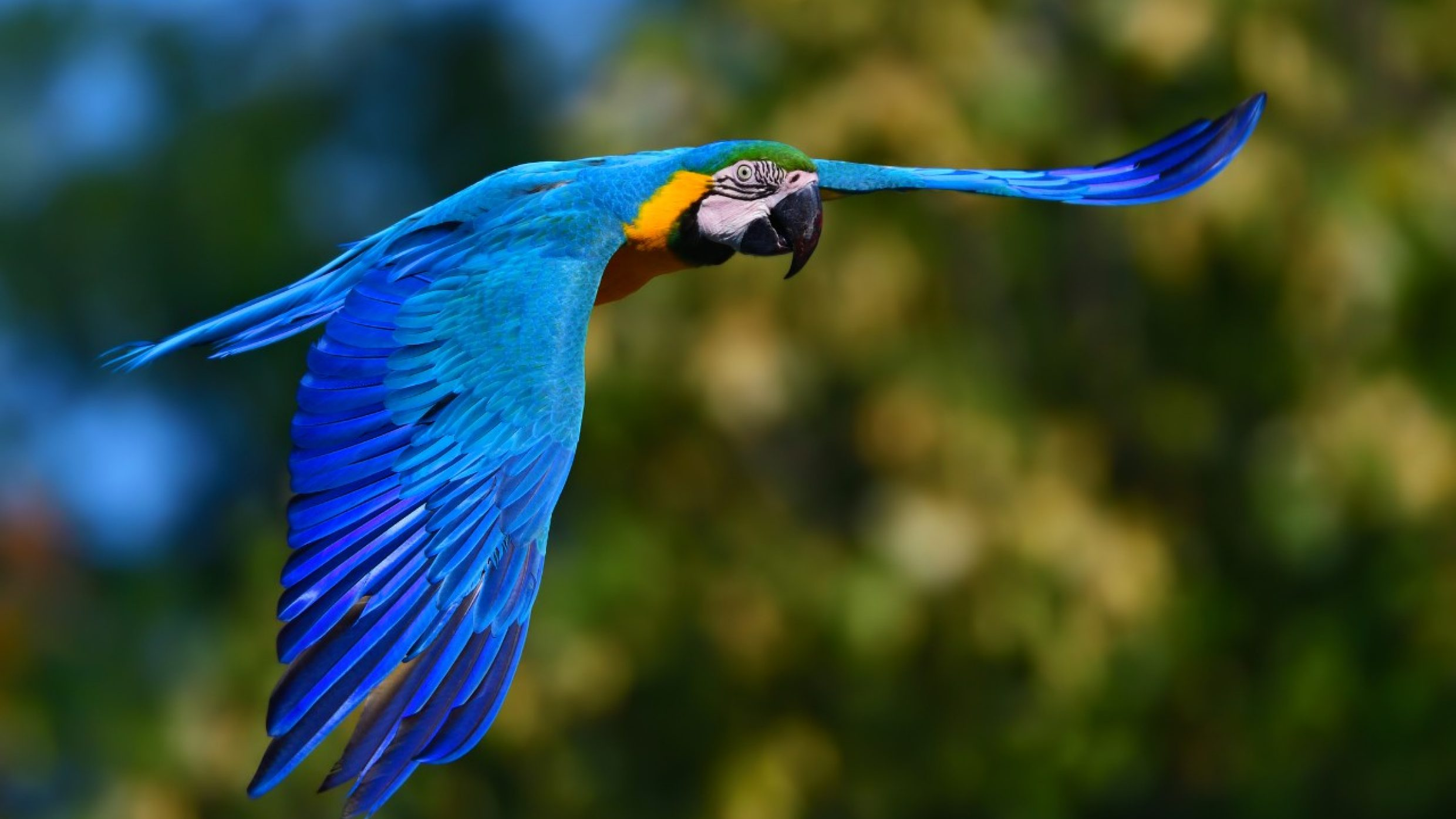 Parrots are the only birds that can live longer than people, with a life expectancy of up to 100 years. The oldest blue and yellow macaw on record even lived to 104 in England.